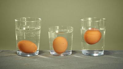 telur segar
