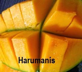 mangga harumanis